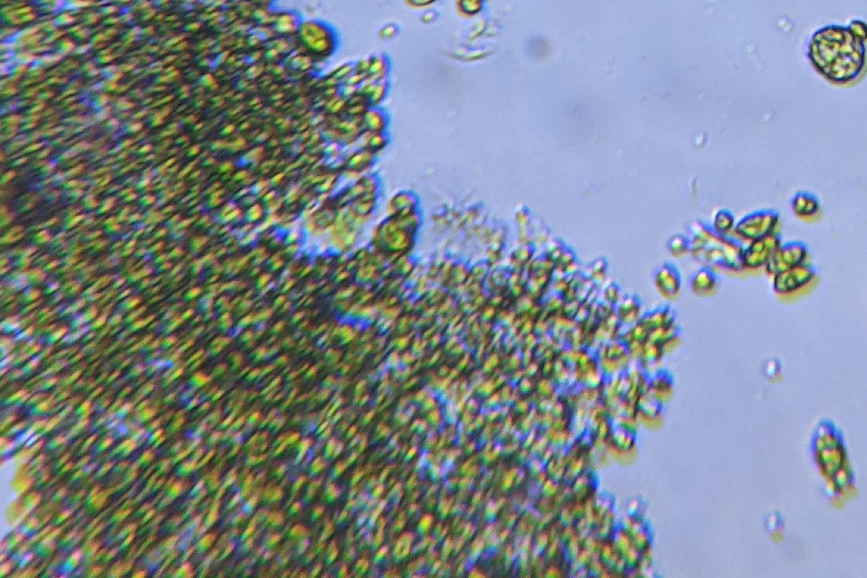 algae-1-2-1